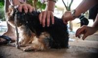 Aprovado projeto instituindo campanha permanente para estimular vacinação de cães contra a cinomose
