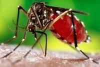 Dengue: Causas, Sintomas e Tratamentos